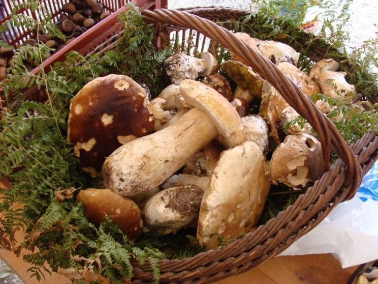 Gastronomie - Cèpes du Périgord